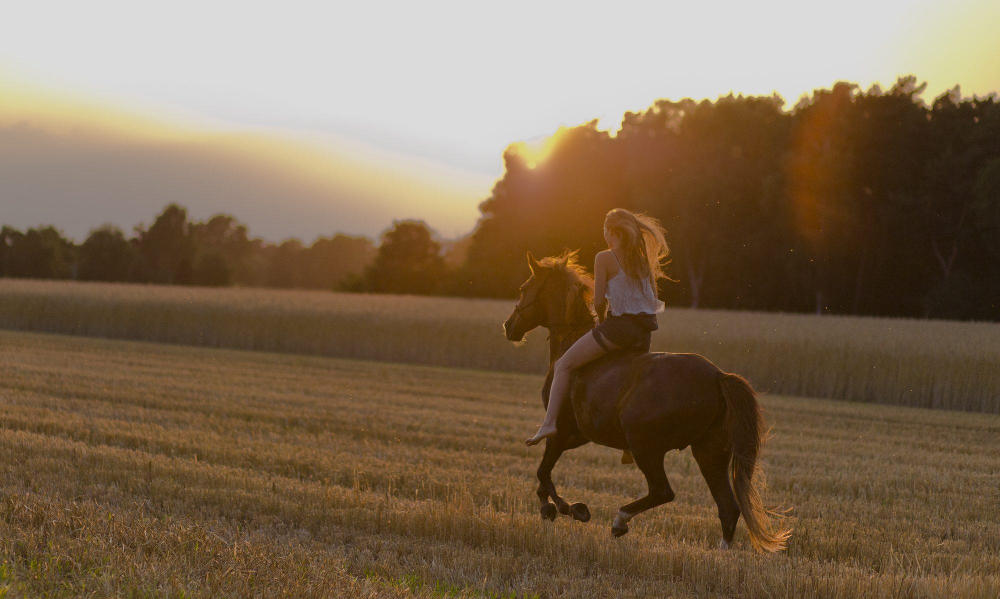 """Wir bieten hier einen Ort, wo es nicht nur um """"Reiten lernen"""" geht, sondern um Übernahme von Verantwortung und Entwicklung der Persönlichkeit eines jeden. Unsere Pferde sind wertvolle Lehrer für´s Leben. Unseren Schülern lehren wir respektvolles Miteinander im Sinne des """"Horsemanship""""."""